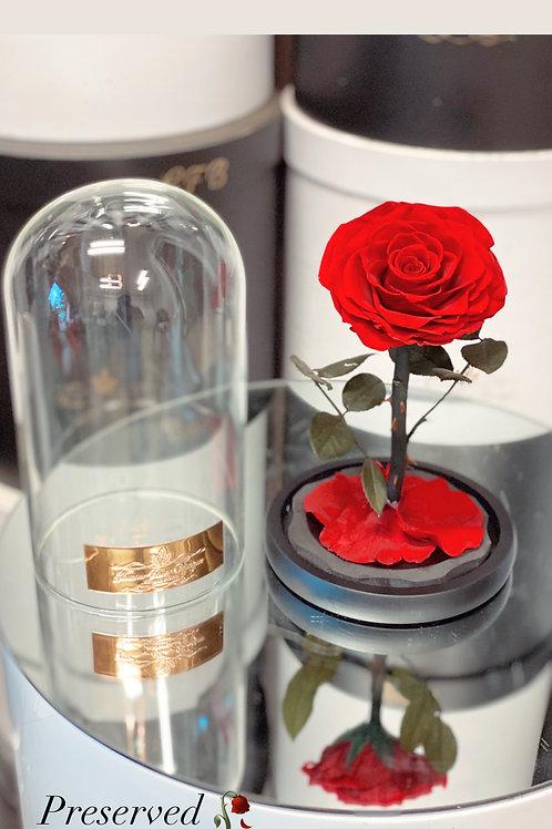 Single preserved Roses