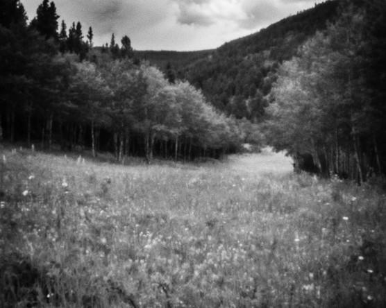 Caribou Ranch Meadow