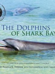 THE DOLPHINS OF SHARK BAY written by Pamela S. Turner