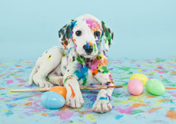 Easter Dalmation Puppy