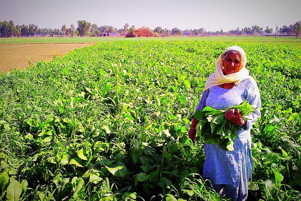 Harvesting crops for dinner