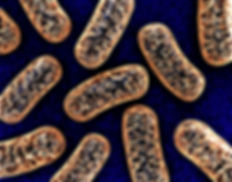 Mitochondrien, die Kraftwerke jeder Zelle