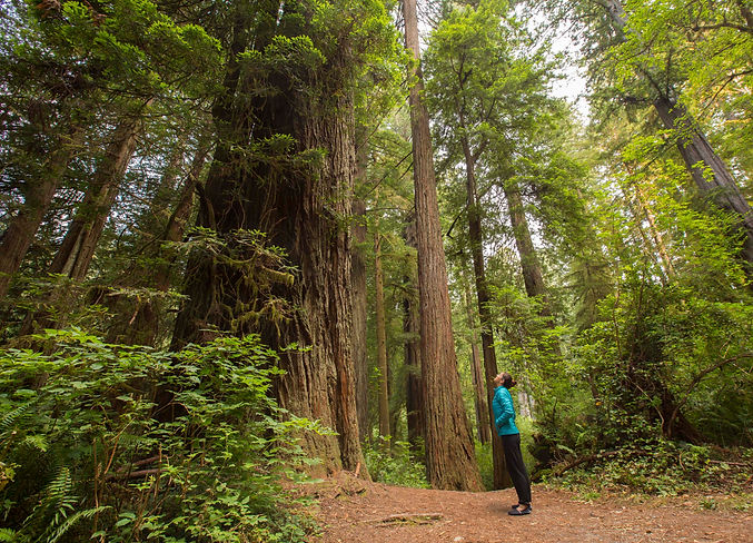 jaala shaw surrounded by trees