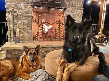 german shepherds relaxing by fireplace