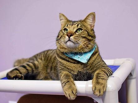 photo of RMFR cat