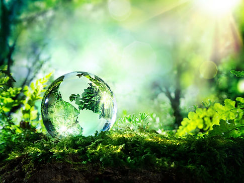 green globe in forest
