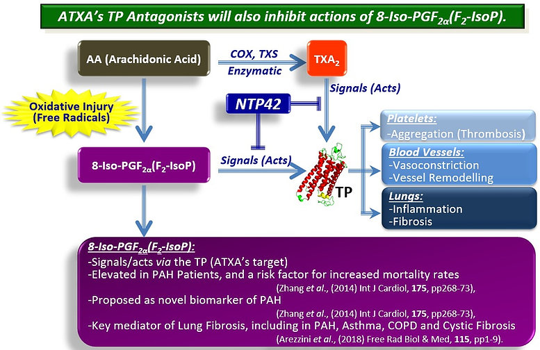 PAH, Pulmonary Arterial Hypertension, NTP42