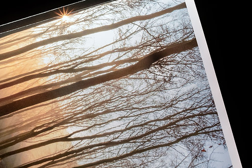 """West Woods in autumn"" photography zine"