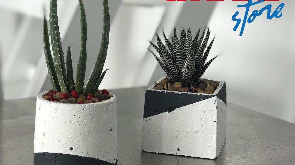 Combo Macetero Mini Cactus Modern Two