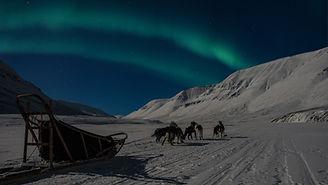 nordlyshundespann30.01.2019.jpg