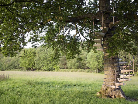 CANOPYSTAIR ® Spiral Staircases that can be strapped to any tree