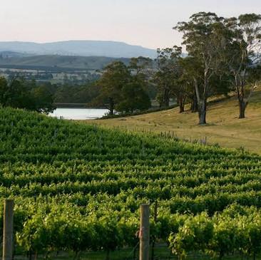 Maceon Ranges Wineries