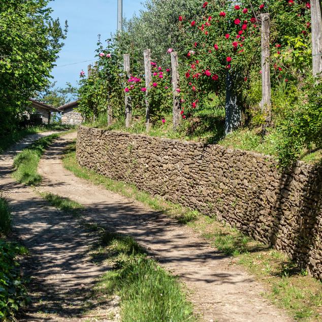 la strada che porta a Cerreta S.Nicola