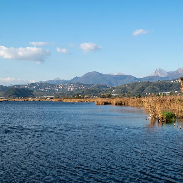 il Padule e le Alpi Apuane sullo sfondo