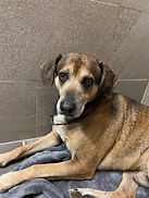 Hound Dog1.jpg