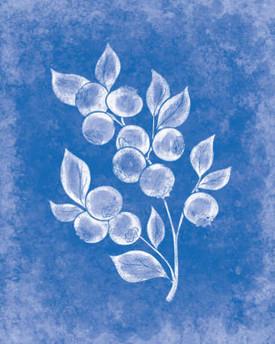 rjw-37-blueberries-cover-100-recipes-c60