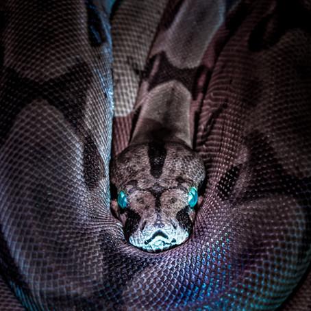 Be a snake!