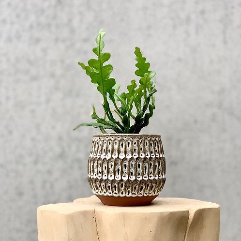 Glazed Pot Small