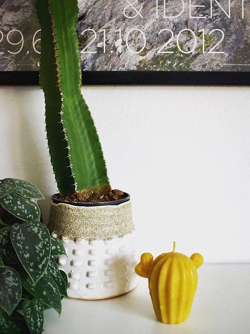 Bienenwachskerze Kaktus