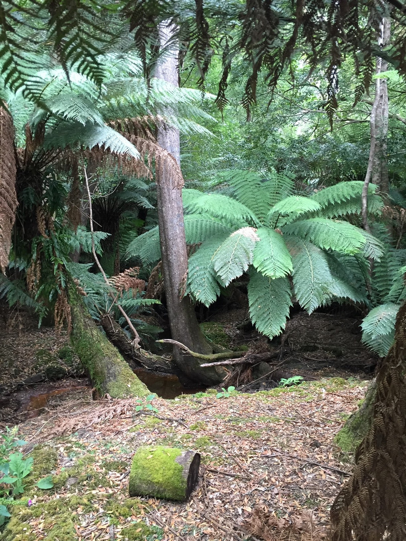 Rain Forest Evercreech Conservation Rese