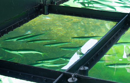 Glass bottom boat.PNG