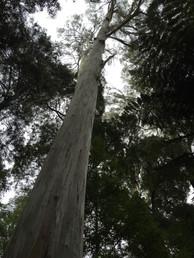 Evercreech Conservation Reserve Tasmania