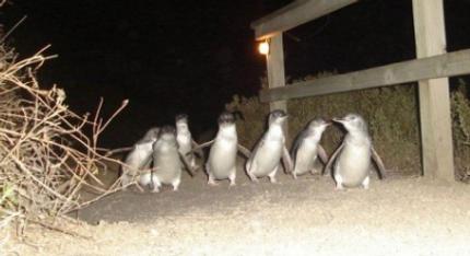 Penguin Tours.PNG
