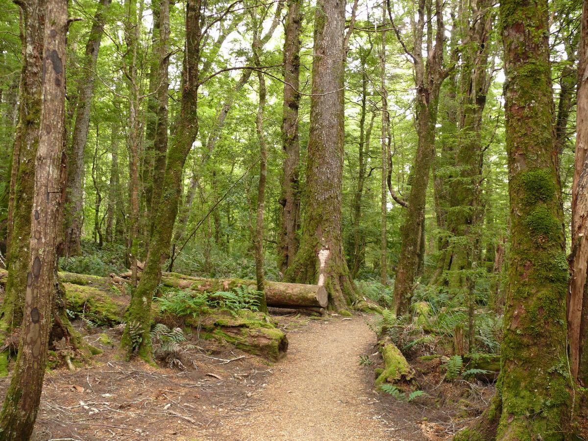 Ralphs Falls Trail