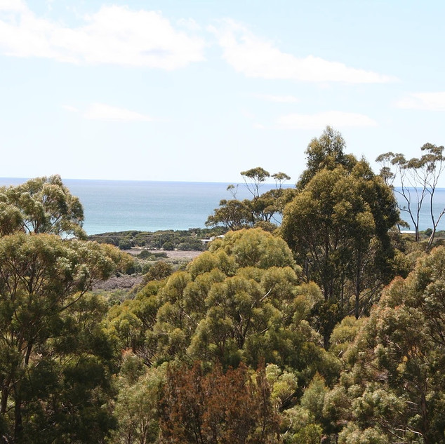 Currawong view