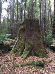 Big Tree Evercreech Conservation Reserve