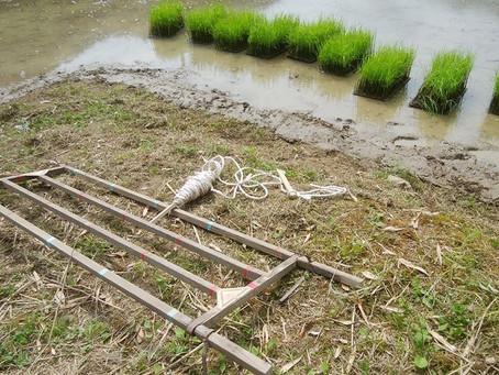 田植えの道具