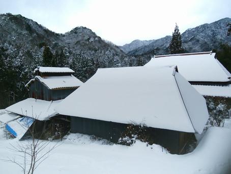 今年も雪が積もりました。