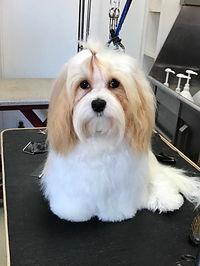 Fluffy groomed.jpg