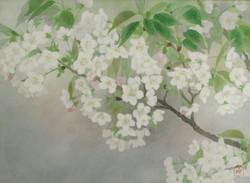 牧野伸英 桜 8号