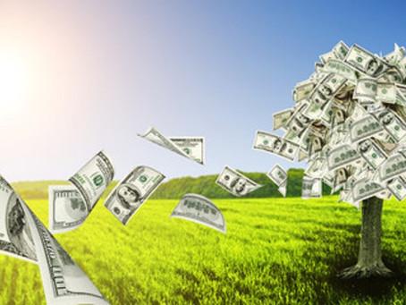 Trova il tuo albero dei soldi con i Fiori Australiani