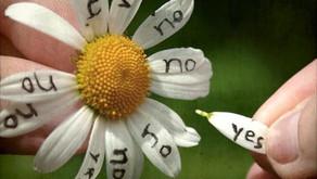 Un fiore, tante possibilità...