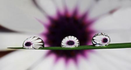 Floriterapia: la medicina dell'informazione