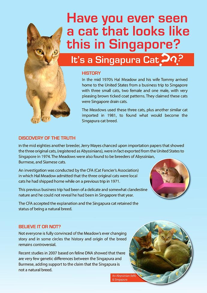 Singapura cat 594x841 pathed Sep2017-1.j