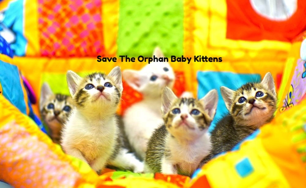 Save the baby orphan kittens_edited
