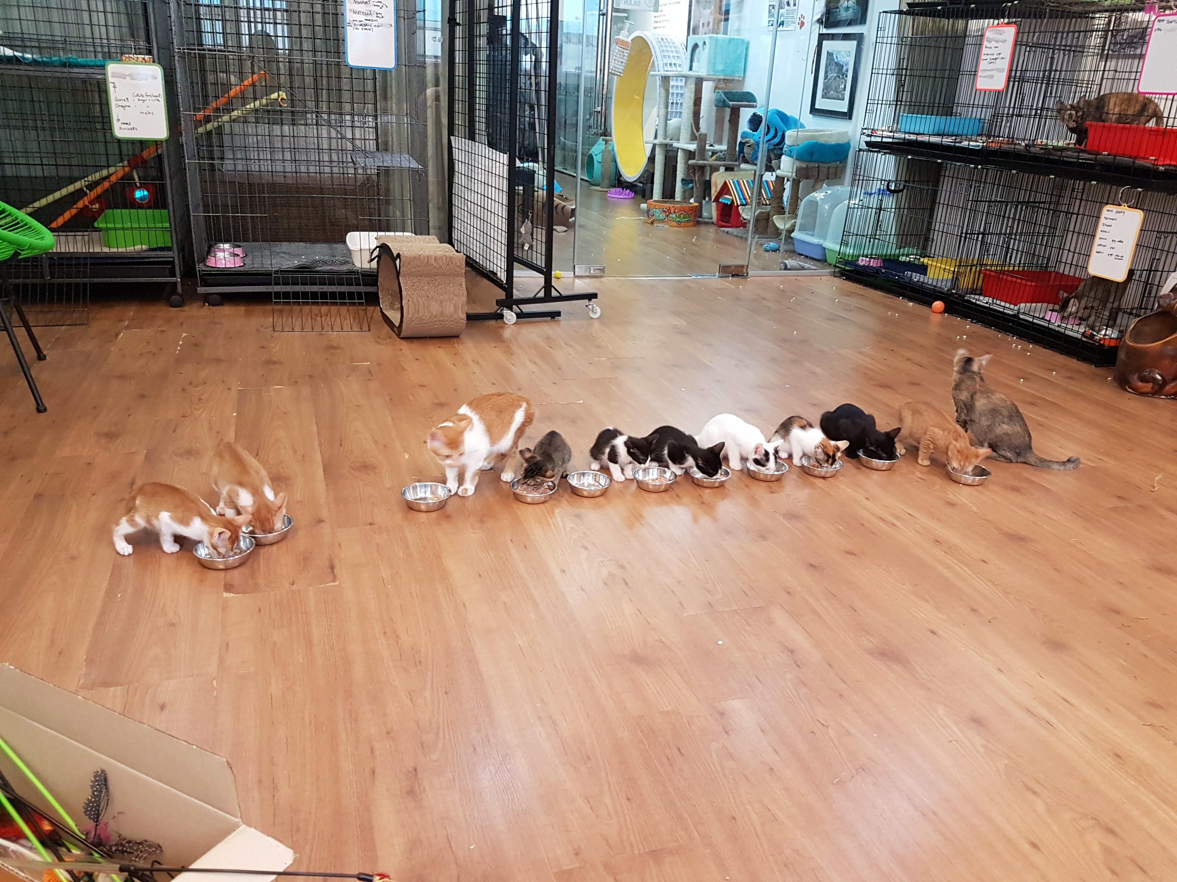 Kitten Feeding Tiime
