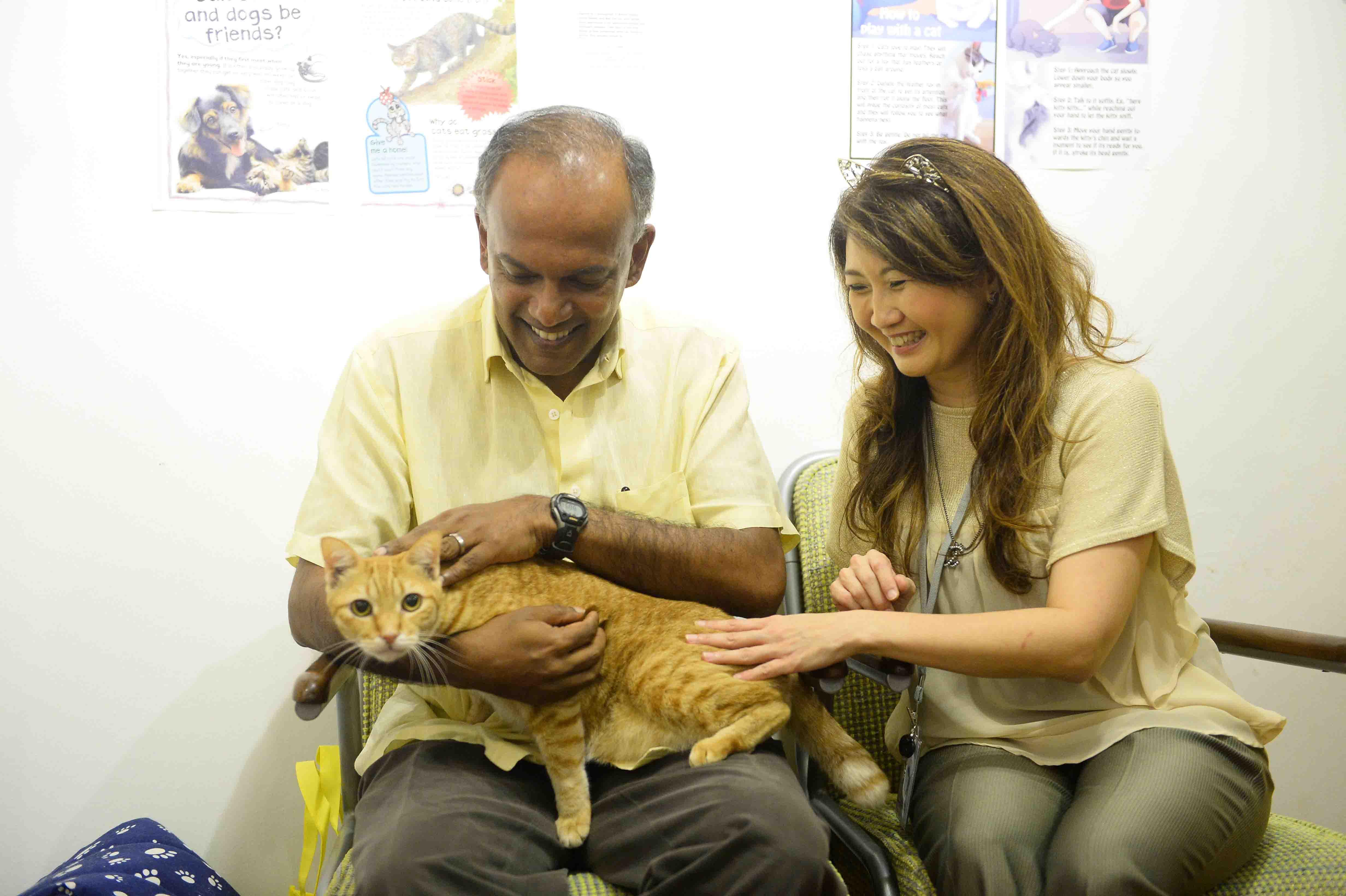 Minster Shanmugam meeting an orphan cat with Cat Museum Founder Jessica Sleet.jpg