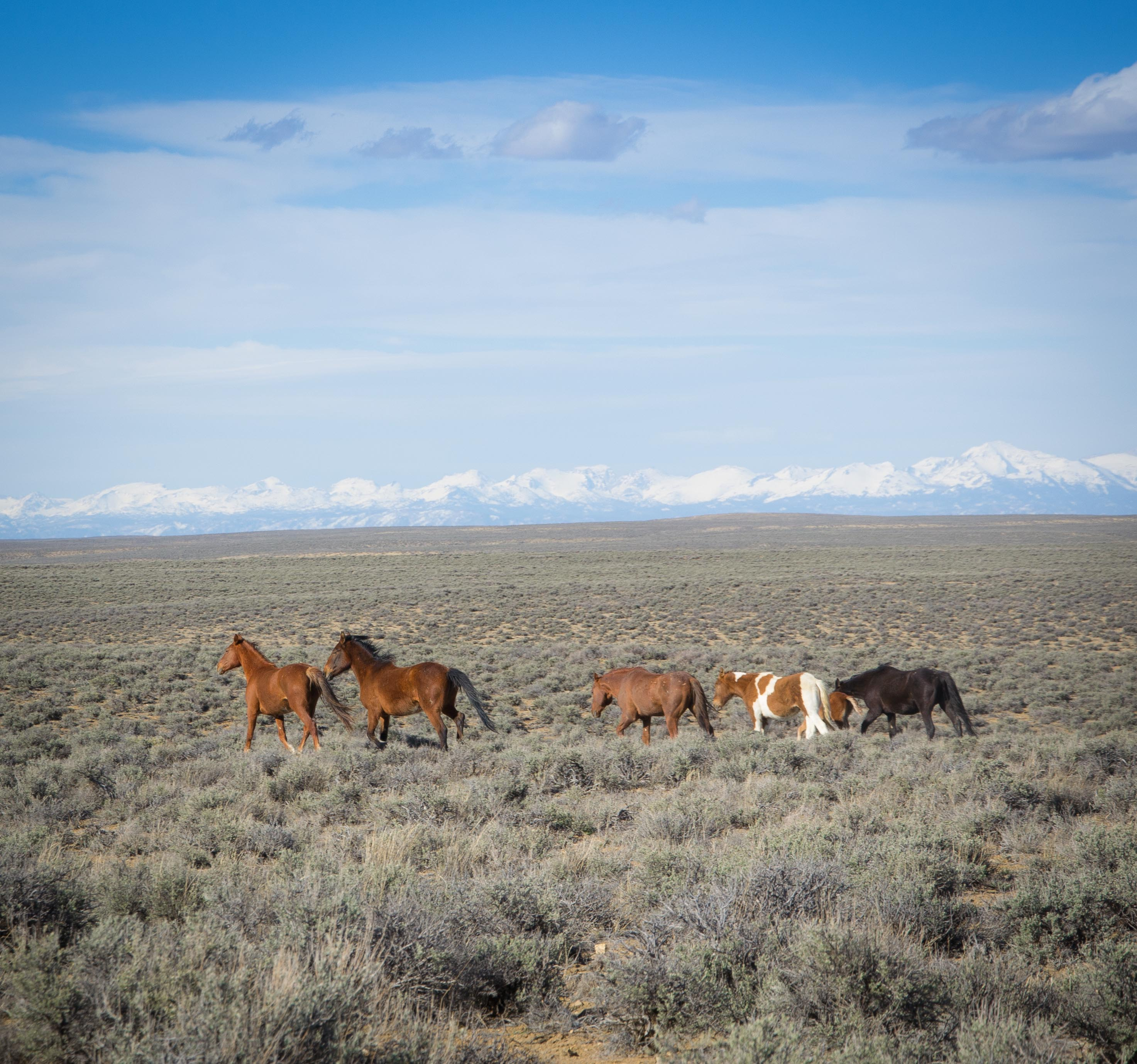 Wild Horses and the Winds