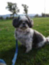 dog_1.0.jpg