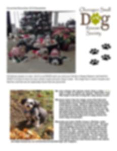 nov_2019_newsletter.png