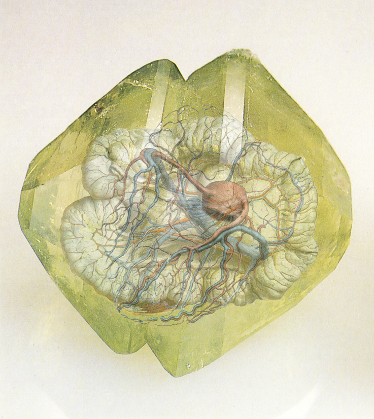 Viscera Mineralis VII