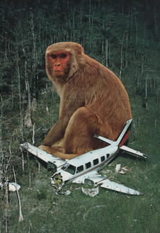 The King Kong Influence