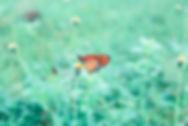 butterfly-2524898_1920.jpg