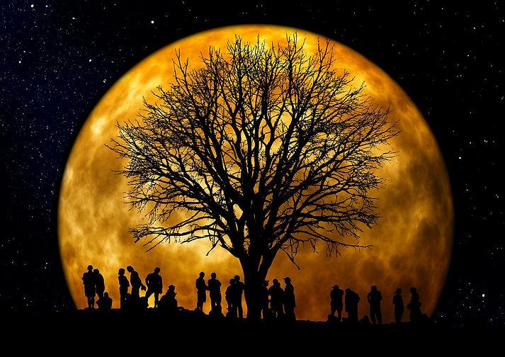tree-66465_1920.jpeg