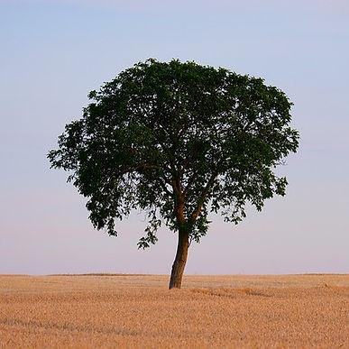 tree-4375787_640.jpg