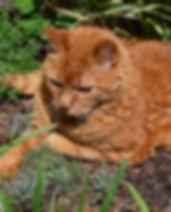 garden-cat-2399887_1920.jpg